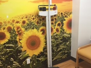 Stand tall in our SUNFLOWER room.